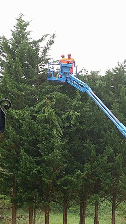 trimming the top of the trees